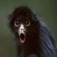 Monkey [DDV]